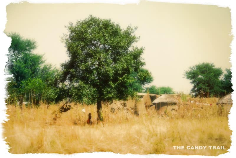 Kids playing under the shade of tree northern ghana
