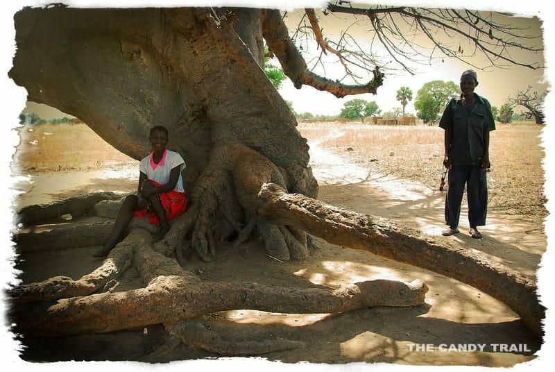 villagers shade under baobao tree northern ghana