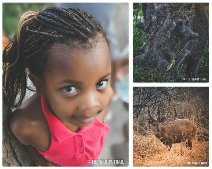 zimbabwe girl and wildlife at victoria falls