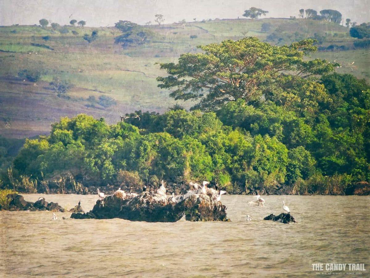 birds-on-rock-lake-tana-ethiopia