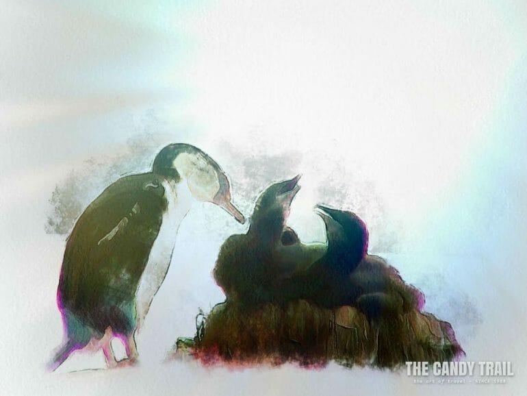 antarctica-cormorant-mother-at-nest-of-chicks