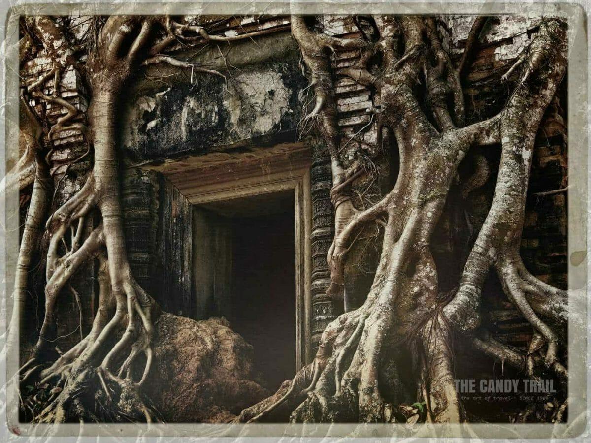 Close Up Trees Strangling Temple Koh Ker Cambodia