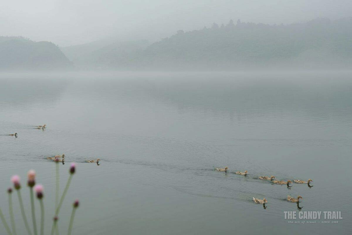 Ducks Misty Mountains Yalu River To North Korea