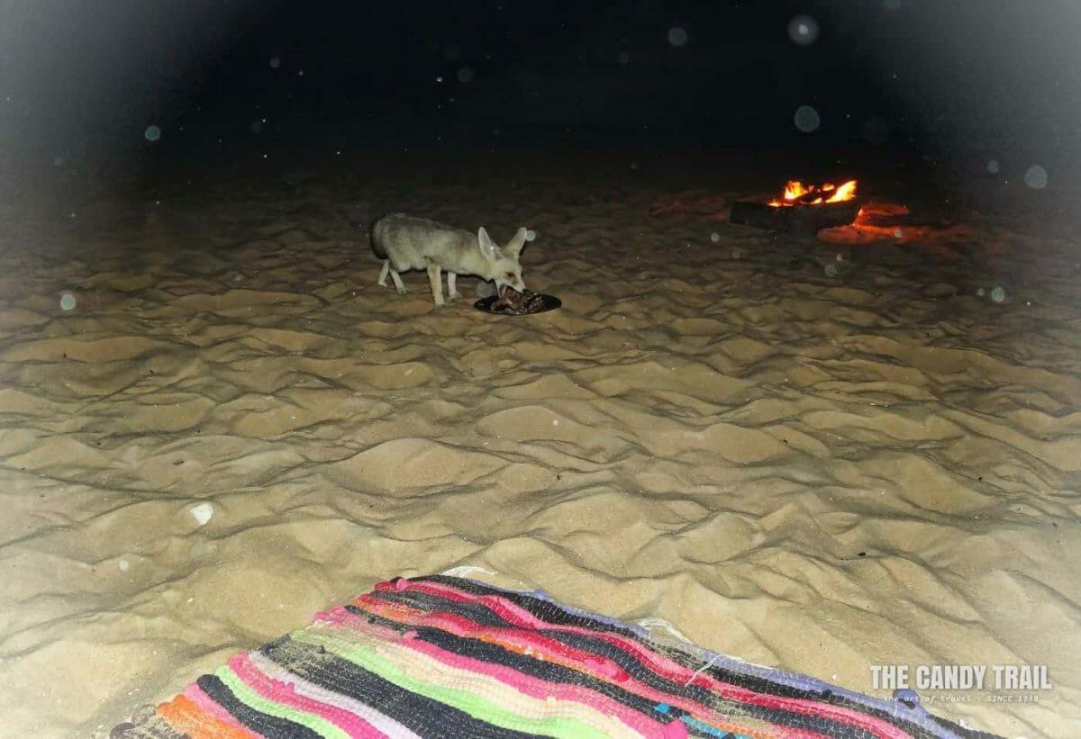 desert fox campsite at white desert tour overnight trip in egypt