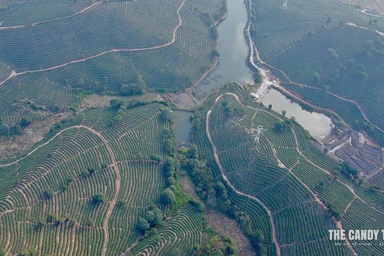 xishuangbanna-tea-plantation-aerial-shot-china