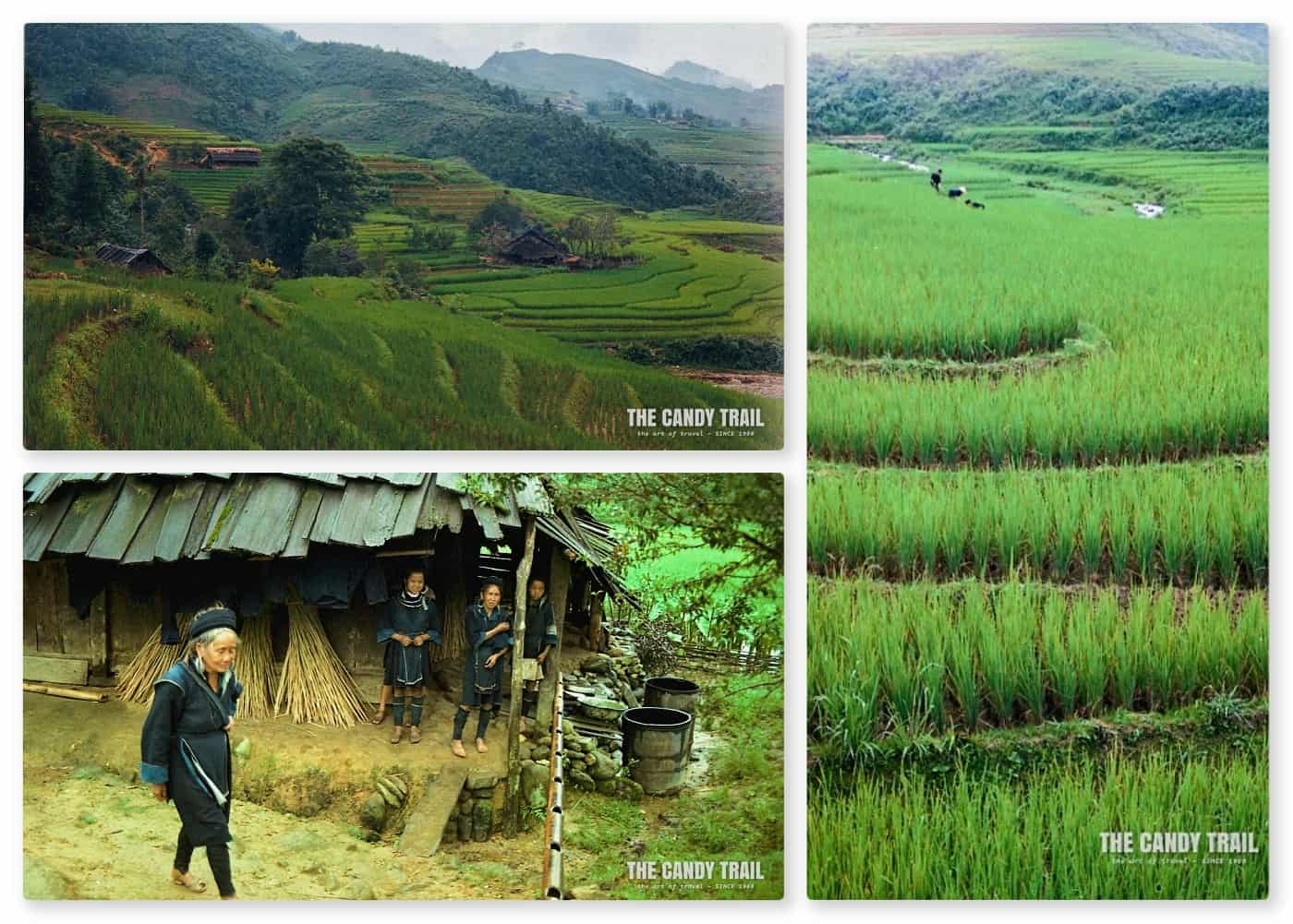 Lush rice paddies Hmong hill tribe village vietnam