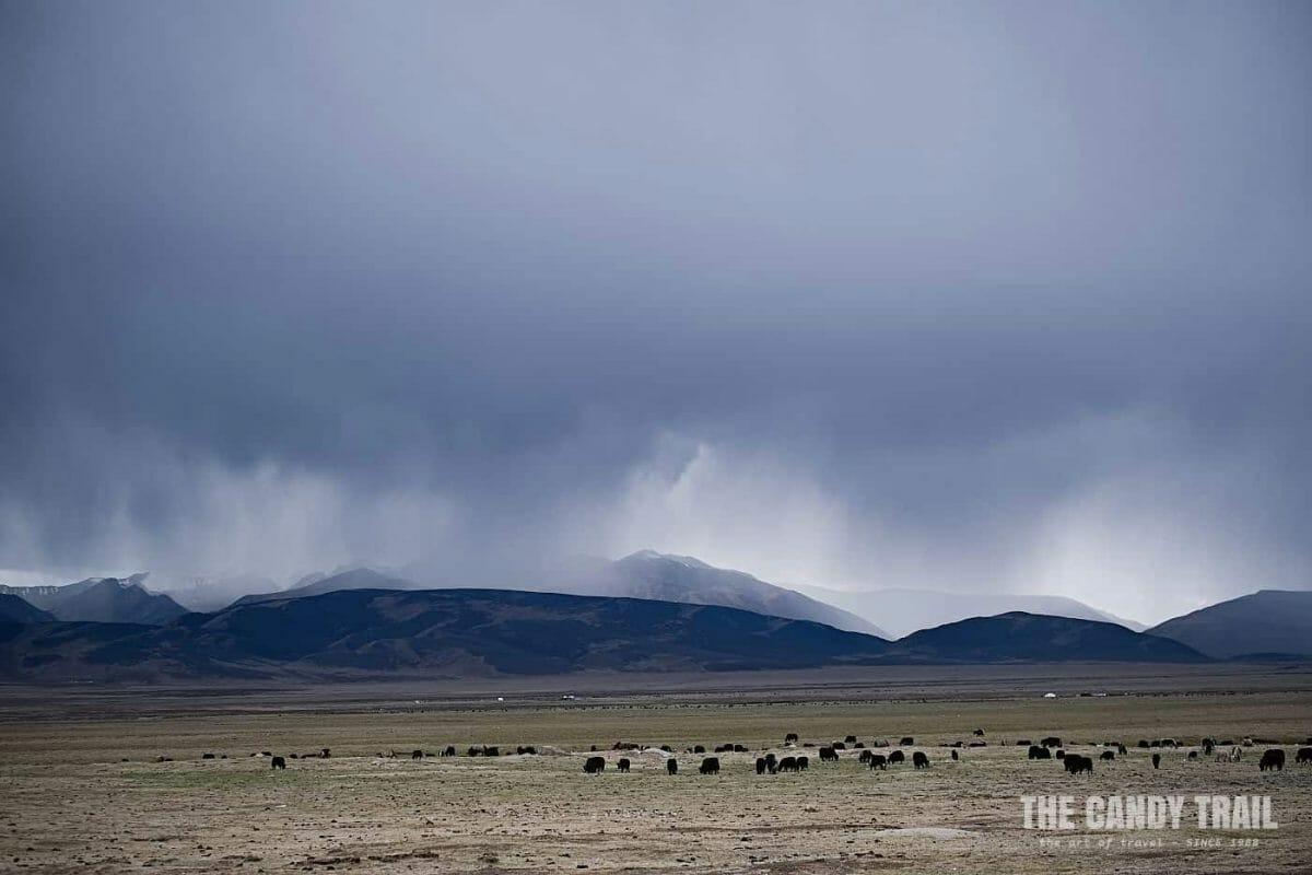 storm over yaks tibetan sichuan china