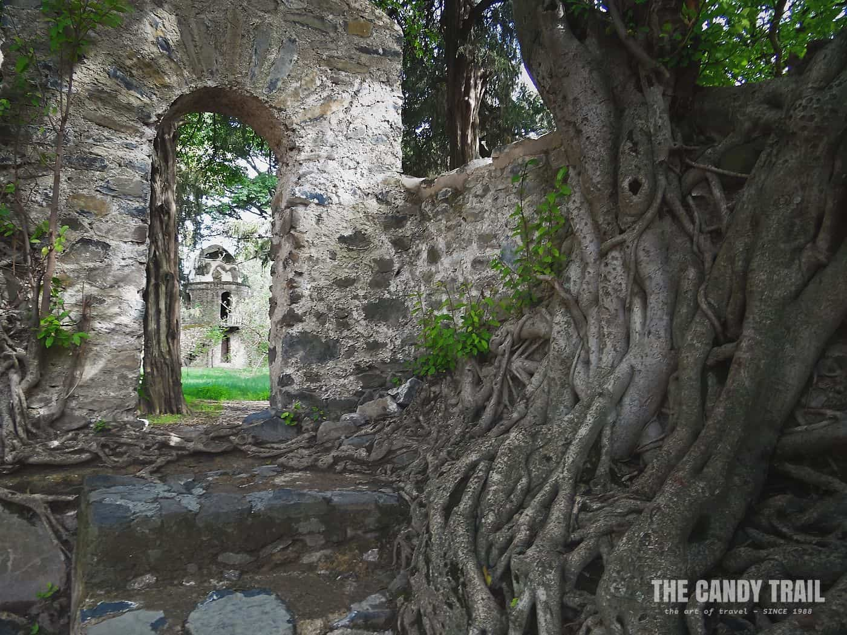 walls strangled by trees at fasiladas bath gonder castles ethiopia